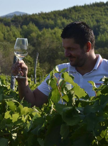 Nikola Mirošević Winemaker i enolog Merga Victa i Dalmatian Dog vinarije