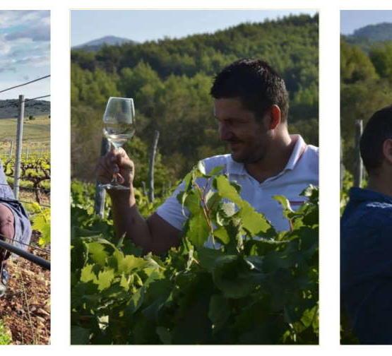 Postavili smo pitanja našim vinarima Igor Radovanović, Nikola Mirošević, Juraj Sladić