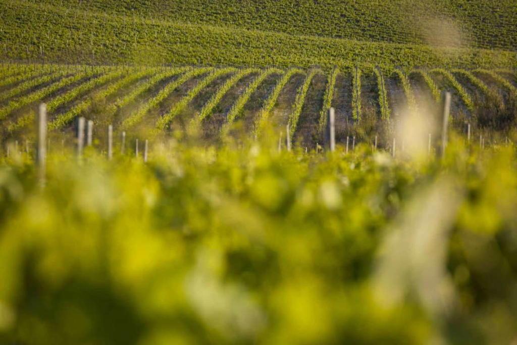 Vinogradi Testament vinarije